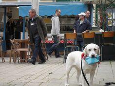 sûrprise, sûrprise!  - www.surprisesurprise.at Dogs, Animals, Animales, Animaux, Pet Dogs, Doggies, Animal, Dog, Animais