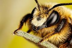 Image result for bumble bee photography