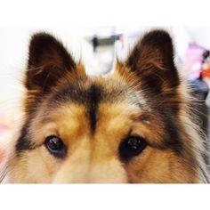 ... Hello😁 。 。 。 。 。 #金金豬照片簿  #愛犬  #唐狗  #唐狗也是寶  #doglover #doglife #dog #dogstagram #dogoftheday #instadog #mixeddog #mongrel #cutedog #ilovemydog #dogsofinstagram #dogsofig #hkdog #instalike #instafollow #furbaby #dogs #dailyfluff #bestwoof #picoftheday #photooftheday #cuteness #bestwoof #dailyfluff #dogdaily #犬 #狗 #photography