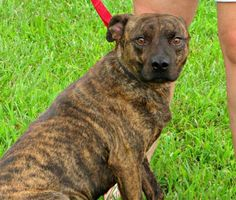 Meet Ray - New to LDDR.  More info and pictures coming soon. Last Day Dog Rescue | , Livonia, Michigan
