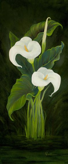 """""""Sisters"""" Oil on Canvas Calla Lillies, Calla Lily, Outline Designs, Oil Painters, Universe Art, Oil On Canvas, Art Drawings, Fine Art, Flowers"""
