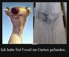 Ich habe Sid Fossil im Garten gefunden..