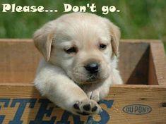 Please Don`t Go