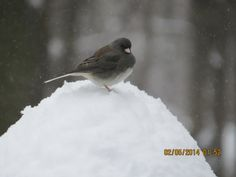 """""""#WinterinCT"""" """" #CenterofCT"""".............. Winter in Ct photo Contest.   King of the Hill"""