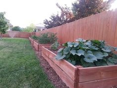 Great idea for Community Garden along the west fence #5 - Raised garden boxes