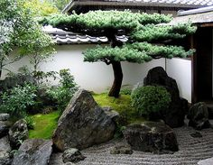 japan garden A pine in the corner. The gravel stream 'flows' under the elevated path to the right. Daisen-in, a subtemple of Daitoku-ji, was founded in 1509 by Zen priest Kogaku Soko