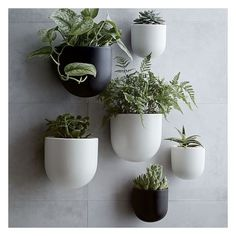 """West Elm Ceramic Wallscape Planter, White, 4"""" ($19) ❤ liked on Polyvore featuring home, outdoors, outdoor decor, garden decor, garden wall decor, garden planters, white ceramic planter and west elm"""