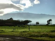Parker Ranch, Big Island of Hawa'ii