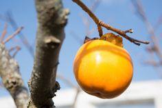 ...quel caco dimenticato sull'albero! :)