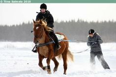 Ski-joring with Finnhorse mare Muhoksen Mimmi Horse Event, Horse Clipping, Mane N Tail, Draft Horses, Horse Pictures, Horse Breeds, Horse Stuff, Event Ideas, Finland