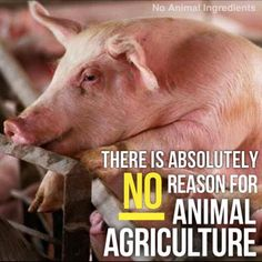 No excuse for exploiting, abusing and murdering animals. Factory farms and industrial dairy farms are legalized animal abuse farms. Don't support these industries. Give up meat and dairy. Go vegan for cruelty free life. Vegan Facts, Vegan Memes, Vegan Quotes, Going Vegetarian, Going Vegan, Vegetarian Recipes, Reasons To Be Vegan, How To Become Vegan, Animal Agriculture
