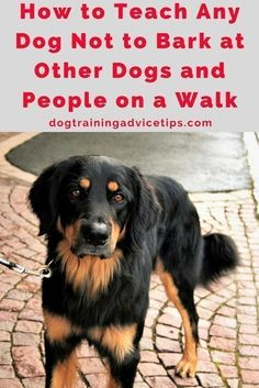 How to Teach Any Dog Not to Bark at Other Dogs and People on a Walk | Dog Training Tips | Dog Obedience Training | Dog Training Ideas | http://www.dogtrainingadvicetips.com/teach-dog-not-bark-dogs-people-walk #DogObedience