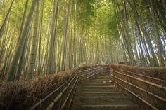 Sagano Bamboo Forest in Arashiyama | © Kanisorn Pringthongfoo/Shutterstock