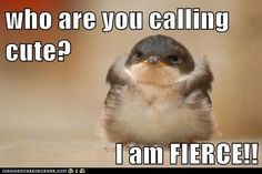 Top 40 Funny animal picture quotes #humor quotes