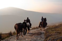 Horseback Riding Trip in Wales Welsh travel outfitter Free Rein arranges unguided pony treks in the moors of Mid Wales