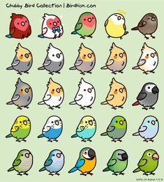 Custom Chubby Bird Sticker Package by Birdhism on Etsy - birds collage