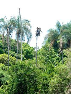 Céu e palmeiras