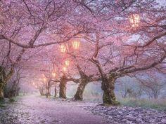 Nikon 100th Anniversary: 100 anni di storie Daniil Korzhonov fotografo paesaggista e Ambassador Nikon per la Russia ha ripreso la fioritura del sakura il famoso fiore giapponese. Il fotografo ha deciso di evitare i luoghi turistici del Giappone e di visitare il villaggio di Iwakuni per catturare la fioritura dei fiori di ciliegio rosa nel loro ambiente naturale. Daniil Korzhonov con #D810  AF-S NIKKOR 24-70mm f/2.8G ED #Nikon100 #nikonitalia #iamdifferent #nikoncentoanni #fiore #sakura…