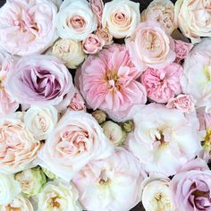 Flirty Fleurs Pink Rose Study. Learn about the various types of roses available.