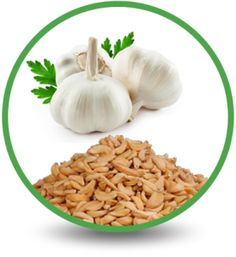 The intense flavor of garlic that just as welcome in customize steal rubs as it is in homemade soups and dishes, dehydrated garlic powder is a useful and healthy addition to your pantry.