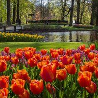 Nowhere else in the world are the flowers and colours of the spring as glorious as at Keukenhof. Here you can find endless inspiration while you relax in the beautiful surroundings of the park. Keukenhof offers you the opportunity to see millions of bulbs in flower, fantastic flower shows and the largest sculpture park in the Netherlands and is the most photographed place in the world. Enjoy the spring!