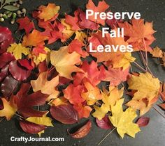 How to Preserve Fall Leaves by Crafty Journal using wax paper and modge podge