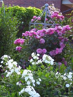 Clematis, Roses Only, Pink Bird, Container Flowers, Early Spring, Spring Garden, Garden Inspiration, Plant Hanger, Hydrangea