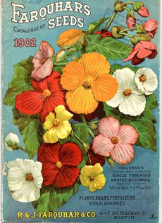 Nursery and Seed Catalog Image Gallery | Special Collections