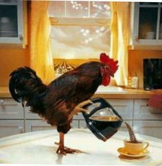 The perfect Rooster Morning WakeUp Animated GIF for your conversation. Discover and Share the best GIFs on Tenor. Gif Café, Animated Gif, Good Morning Good Night, Morning Wish, Good Morning Quotes, Good Morning Gif Funny, Good Morning Coffee Gif, Tag Youtube, Coffee Time
