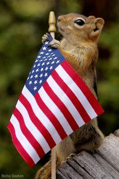 Patriotic squirrel Alpha Gamma Delta USA!