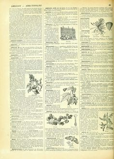French Dictionary Page, 1898 300ppi, 8x11""
