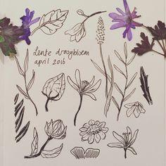 Sketchbook #driedflowers #droogbloemen #ink #flowers #bloemen #illustratie #illustration #botanical #schetsboek #sketchbook #anjamulder www.anjamulder.com