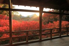 Toufukuji (Kyoto) When to go: mid-November to early December. Open from 8AM-4:30PM. Established in 1236, for these long years the beautiful reddish-brown architecture has been immersed in brilliant reds. If you experience the feeling of overlooking the foliage as it's flooded with light, you might unwittingly feel as though you've been transported to a sacred world.