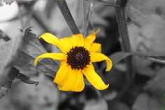 black and white pictures with color | Black and White Wiff Color | Samshemchuk's Photography Blog