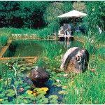 Origin Making A Natural Swimming Pool