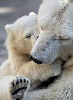 A polar bear mother cuddling her baby.