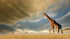 8 fantastiske nasjonalparker i Afrika - Safari med KILROY Future Transportation, Futuristic Design, Future Car, Concept Cars, 21st Century, Animals Beautiful, Backpacking, Giraffe, Whale