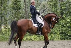 Man rides horse in Rollkur at dressage show warmup. i have never seen someone ride a horse with such carelessness just yanking the head around like a slave and the horse desprately trying to avoid the pain