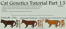There are multiple cat genetics tutorials about, but they tend to only cover the basics (base colors, dilutions, tabby, white-spotting, pointism, & tortie/orange). In-de...