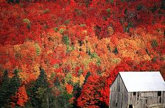 The fall foliage in New Brunswick is notable for its vivacious reds. The province next to Nova Scotia