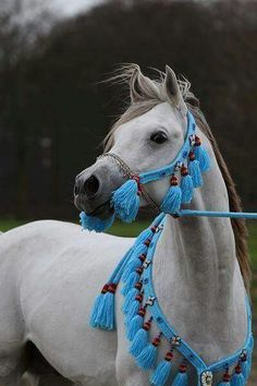 Arabian horse❤❤❤