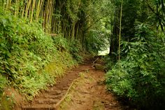 A Guide to Hawaii's Islands - The Manoa Falls trail on Oahu
