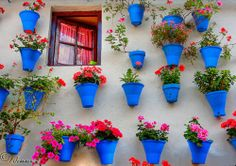 Andalucian pots