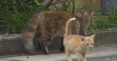 stray kitten takes ownership of cameraman