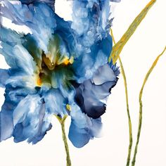 Art Print on Luster Paper of Contemporary Iris 8 x 8 matted to 12x12 inches SchadStudio