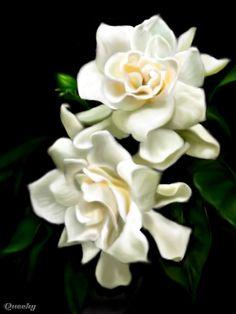 gardenias animated | , variants of Gardenia Rose Crystal Flowers Gardenia Leaf Animated ...