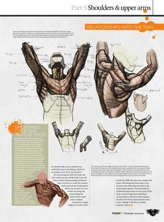 anatomy tutorial arm ~ Drawings ~ anatomy tutorial step by step Arte Com Grey's Anatomy, Arm Anatomy, Anatomy Study, Body Anatomy, Anatomy Art, Male Figure Drawing, Figure Drawing Reference, Anatomy Reference, Pose Reference