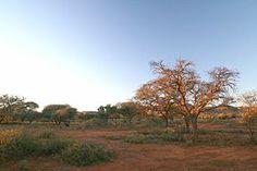 Mokala National Park, Northern Cape, South Africa