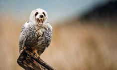 hybrid PS animals to creep you out- for Ree-pandaowl