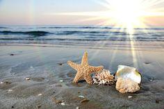 Conchas, estrelas do mar, oceano, ondas, água, areia, praia, praia, surf, céu, nuvens, horizonte